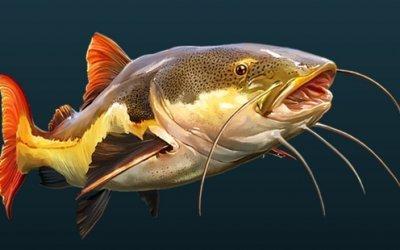 CLFC Catfish Fishing Night
