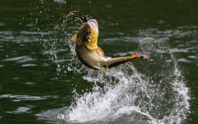 Cedar Lake Fishing Derby Results